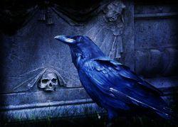 The-Raven-Edgar-Allan-Poe-2
